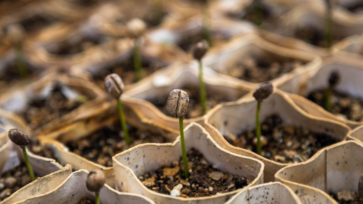 Start Sowing the Seeds of a New Life