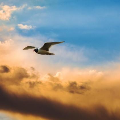 The 4 Fundamental Principles of Spiritual Freedom