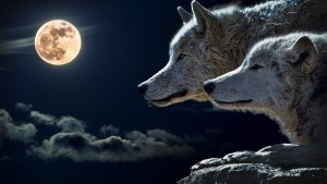 Find Freedom From the Wolves of Worry and Fear
