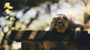 Stop Letting the Fear of Being Misunderstood Make a Monkey Out of You