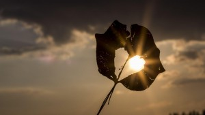Awaken the Love of Light