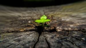 Spiritual Evolution: True or Not?