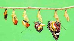 Transformational Living