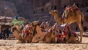 Has Anyone Seen My Camel?