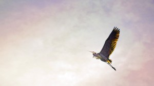 Let Go and Let Higher Life Forces Succeed for You