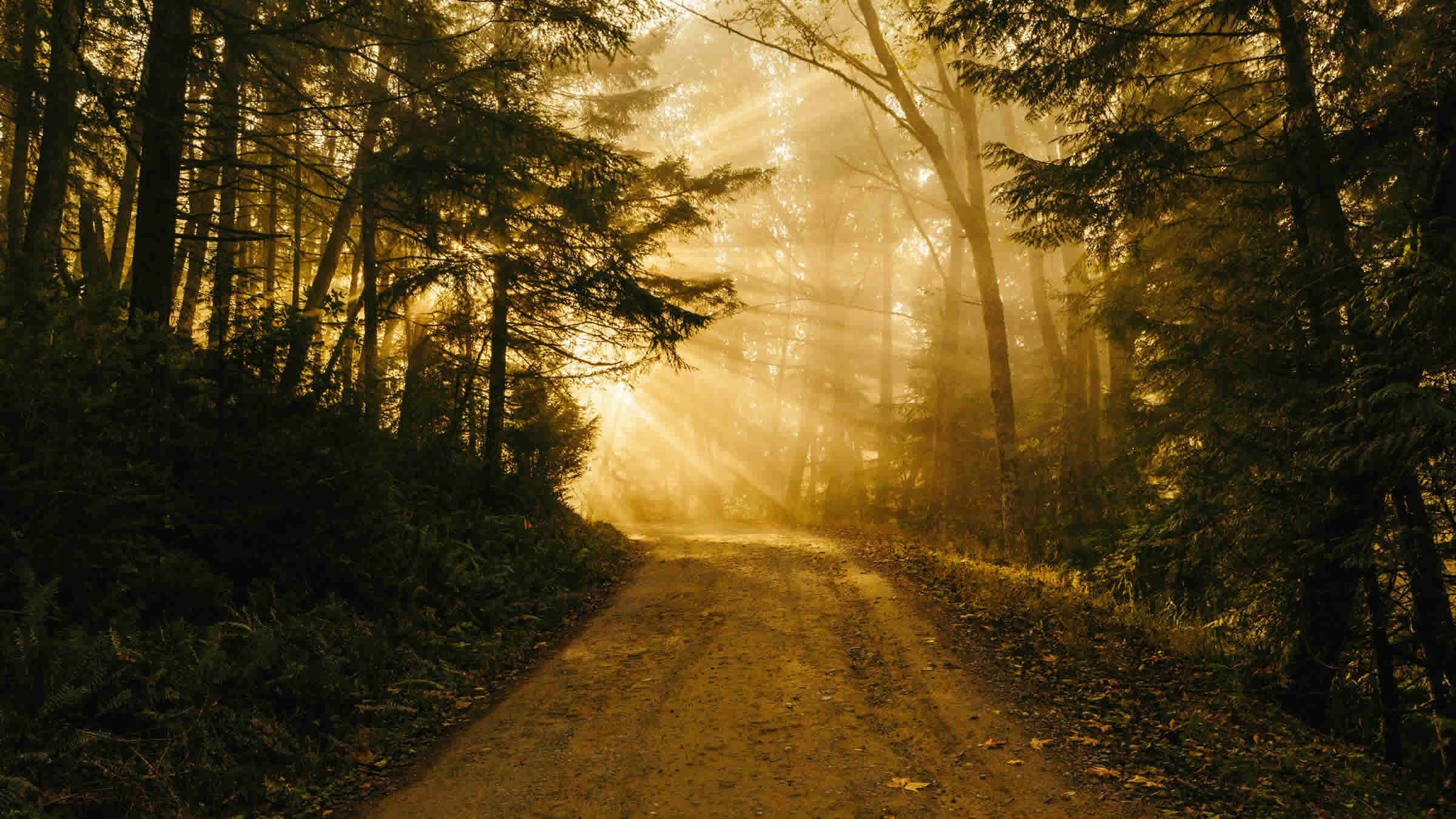 The Path and the Power of Divine Discernment