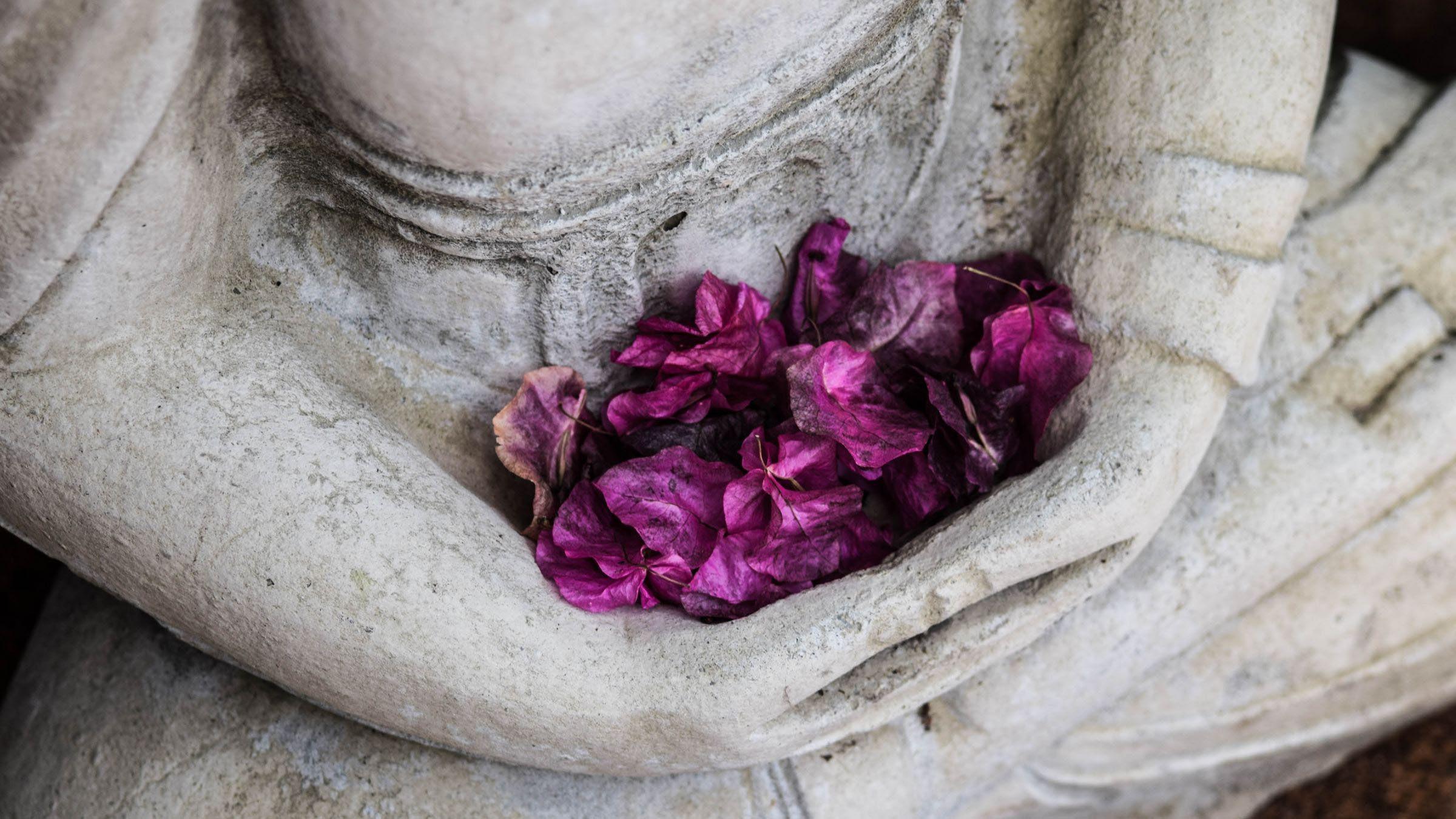 The  Gift of Meditation (Blog)