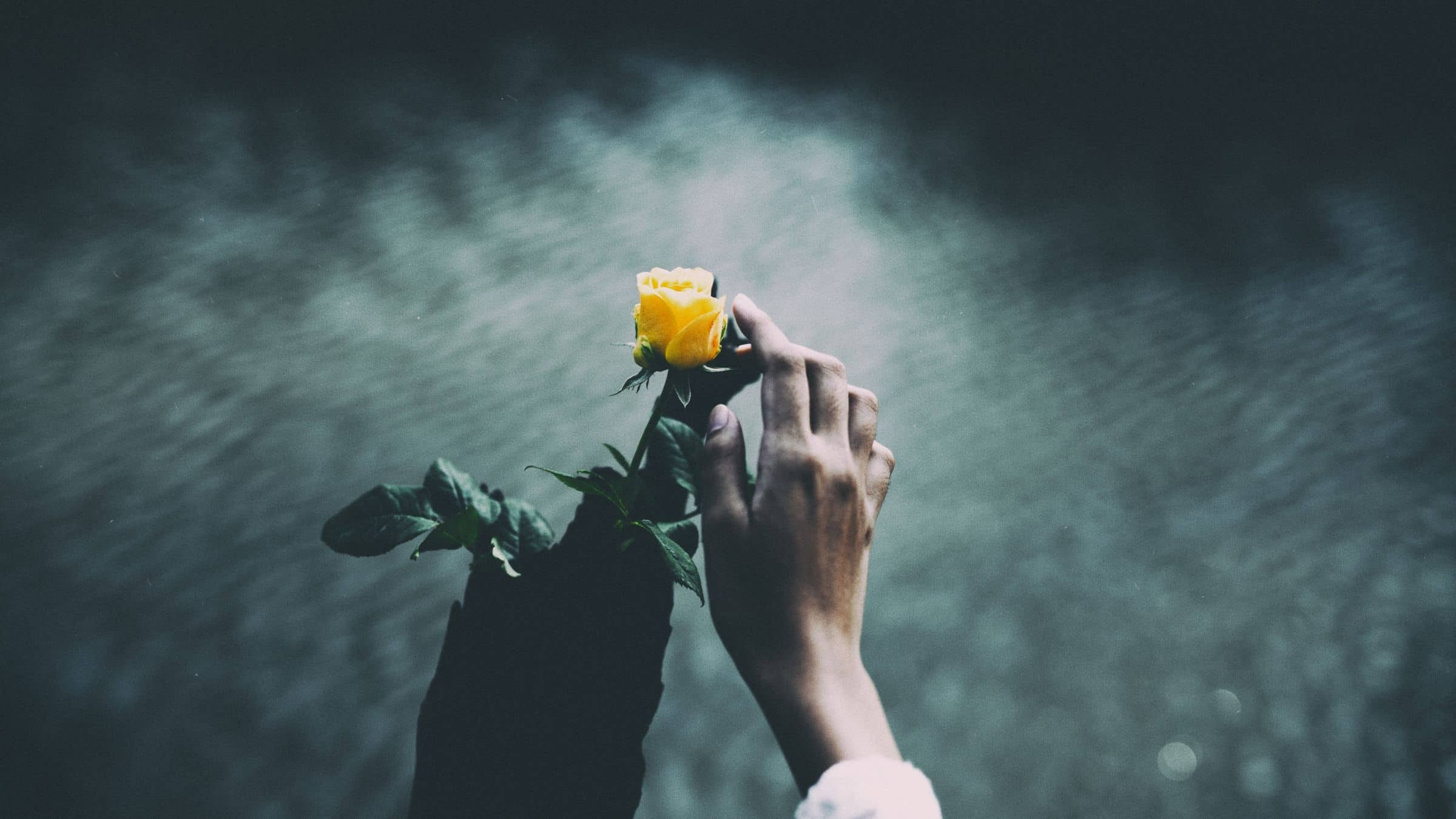 The Revelation of the Golden Rose
