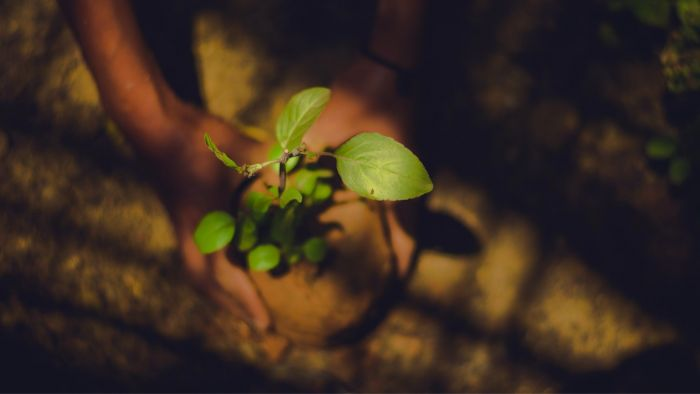 Plant the Seeds of a New Self